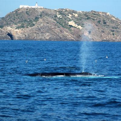 Observer les baleines et les dauphins au Cap de Creus