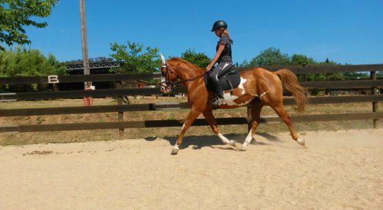 A cavall per la reserva de les Gavarres