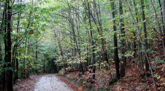 Una passejada pel parc del Montnegre i el Corredor